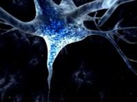 Freuds neurobiologischer Fuß