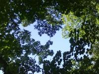 Der ewige Wald
