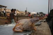 Gefrorenes Importhuhn auf dem Markt in Ghana