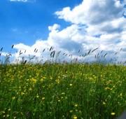 Wie klimaverträglich ist die Landwirtschaft? (©Rainer Sturm - Pixelio)